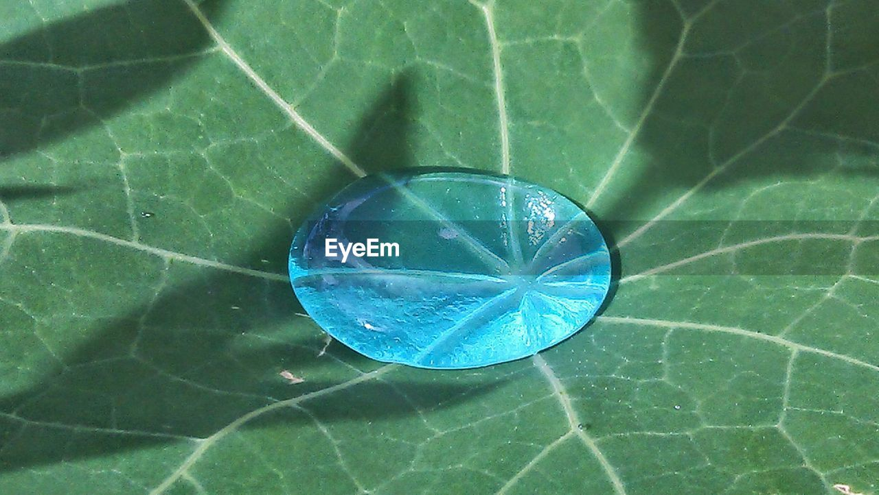 leaf, water, close-up, green color, day, blue, no people, outdoors, nature, beauty in nature, fragility, refraction