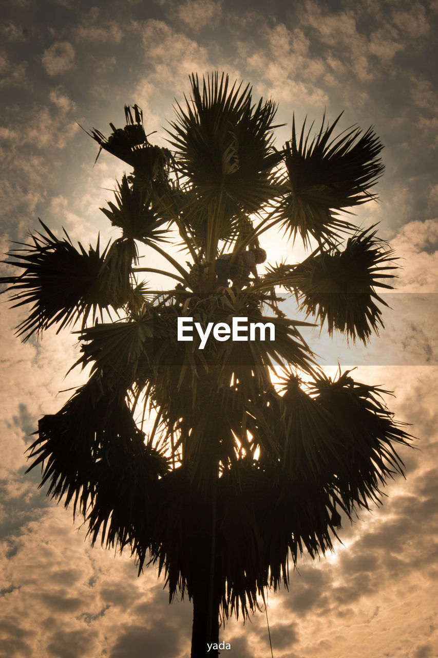tree, sky, cloud - sky, tropical climate, palm tree, nature, plant, no people, low angle view, beauty in nature, growth, silhouette, tranquility, sunset, outdoors, leaf, day, tree trunk, trunk, plant part, coconut palm tree, tropical tree, palm leaf, spiky
