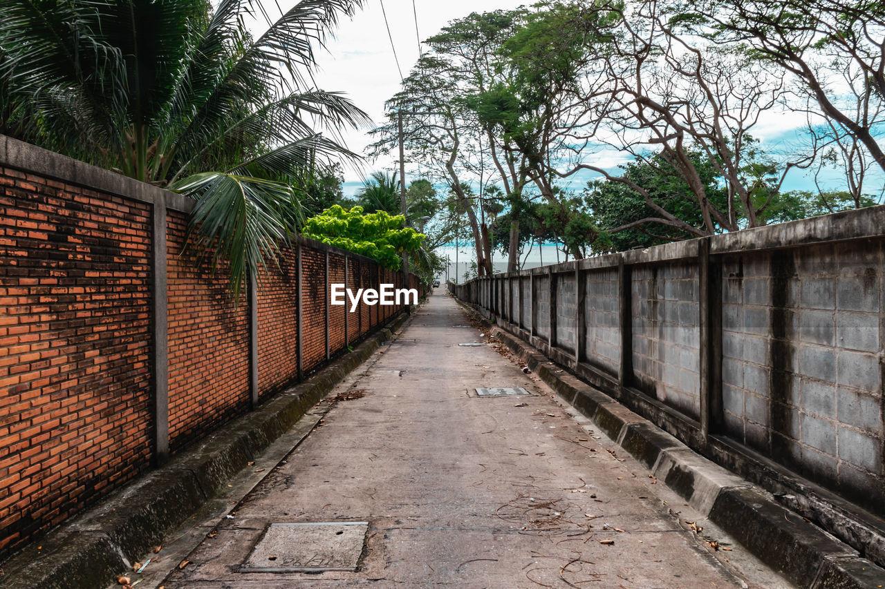 NARROW FOOTPATH ALONG PALM TREES AND PLANTS