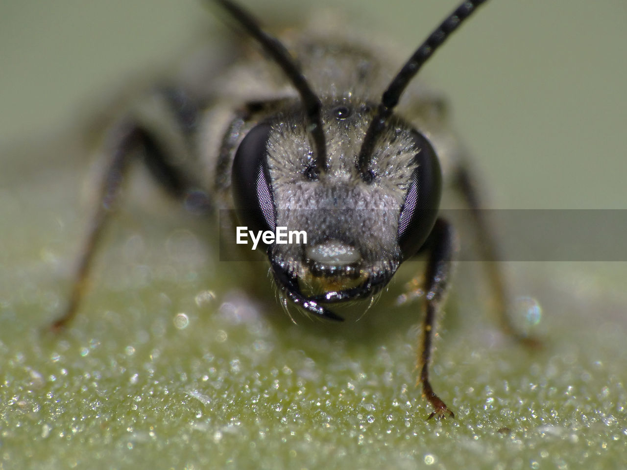 one animal, animal themes, animal, animals in the wild, animal wildlife, insect, close-up, invertebrate, selective focus, animal body part, nature, no people, eye, extreme close-up, macro, day, green color, animal antenna, animal eye, outdoors, animal head