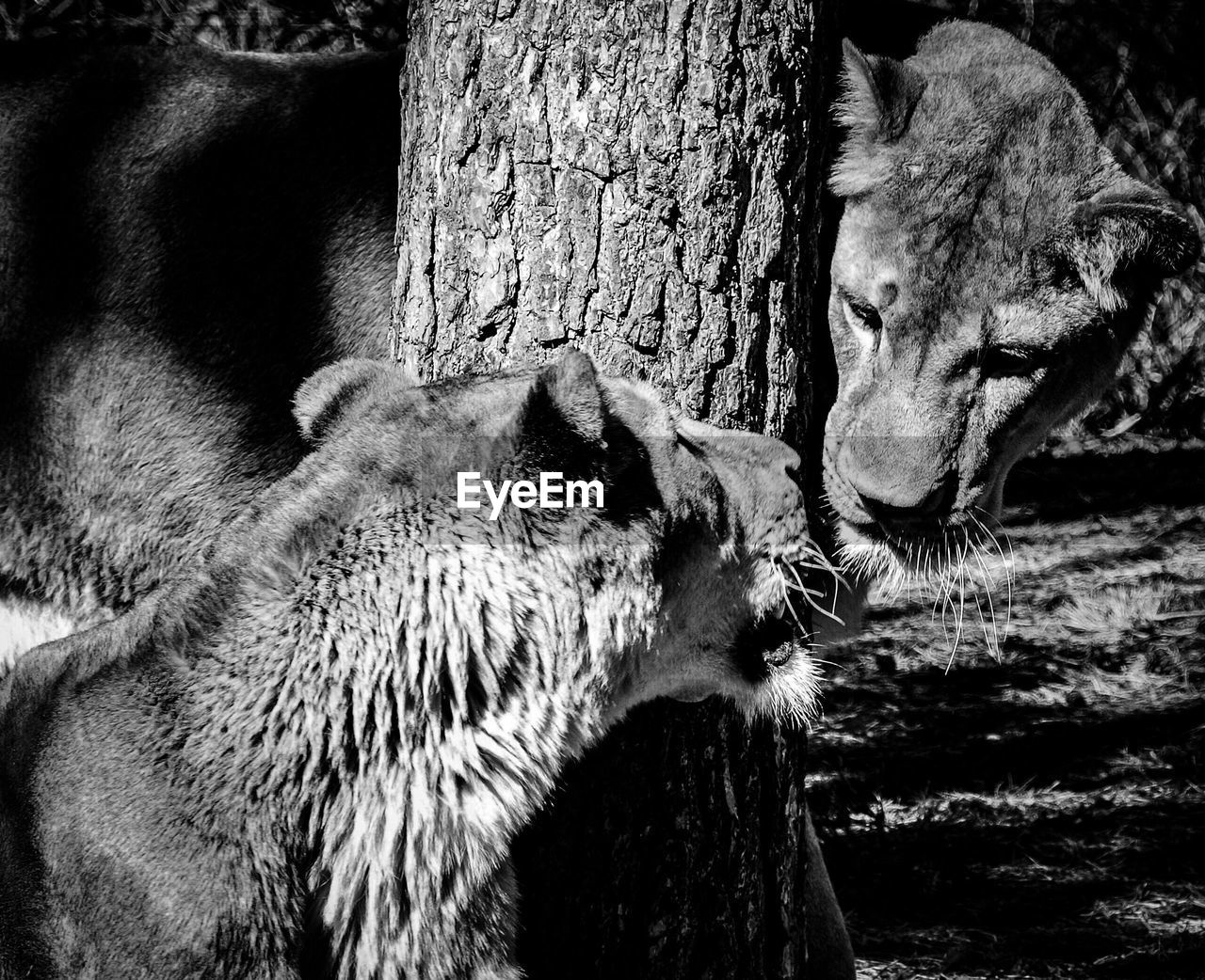 animals in the wild, animal themes, one animal, mammal, animal wildlife, tree trunk, no people, day, outdoors, close-up, nature