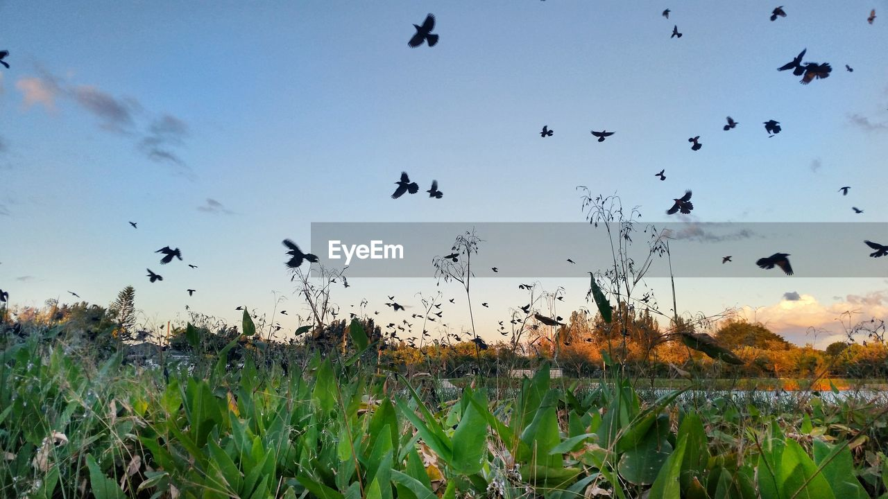 sky, plant, beauty in nature, flying, land, field, growth, animal themes, animal, bird, nature, vertebrate, group of animals, animals in the wild, landscape, scenics - nature, tranquility, animal wildlife, large group of animals, tranquil scene, no people, flock of birds