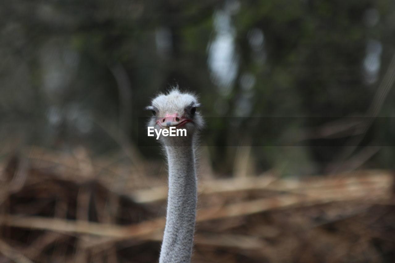 PORTRAIT OF A BIRD AGAINST BLURRED BACKGROUND