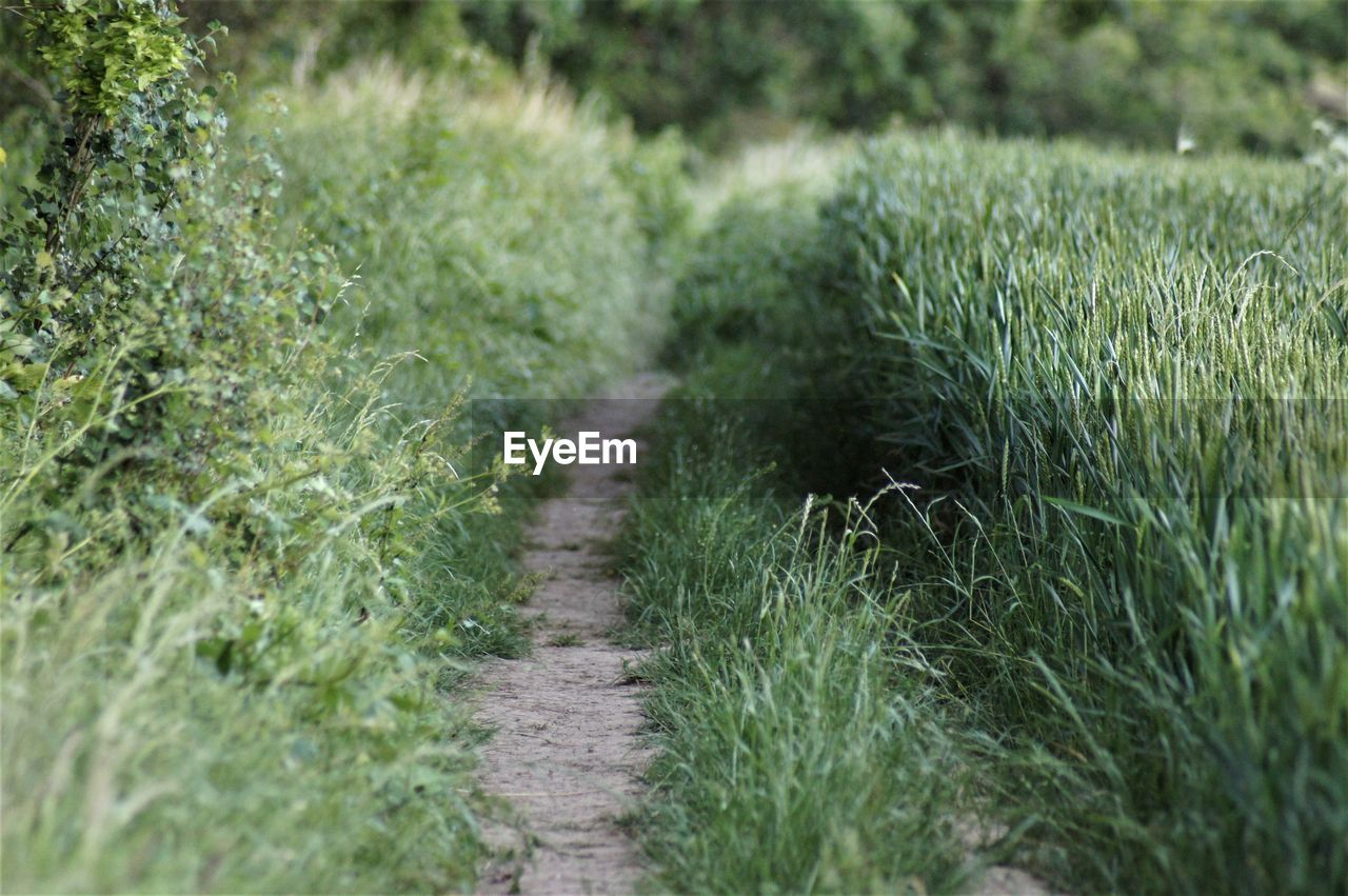 plant, grass, green color, nature, growth, day, footpath, field, land, no people, direction, the way forward, outdoors, landscape, tranquility, selective focus, environment, scenics - nature, rural scene, high angle view, trail