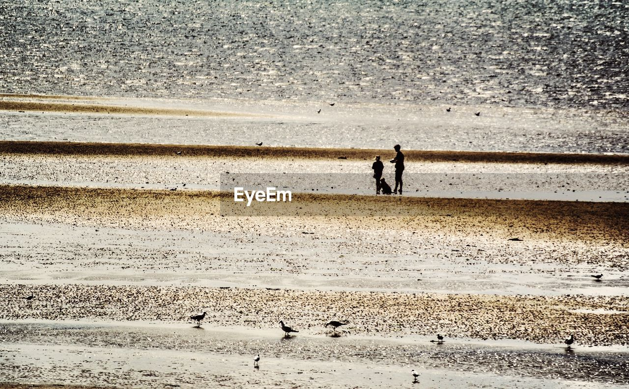 High angle view of silhouette people standing against sea