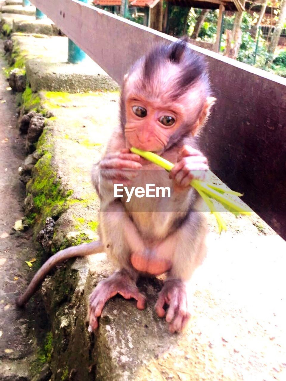 monkey, animal themes, infant, looking at camera, animals in the wild, outdoors, portrait, one animal, day, mammal, animal wildlife, sitting, full length, nature, close-up
