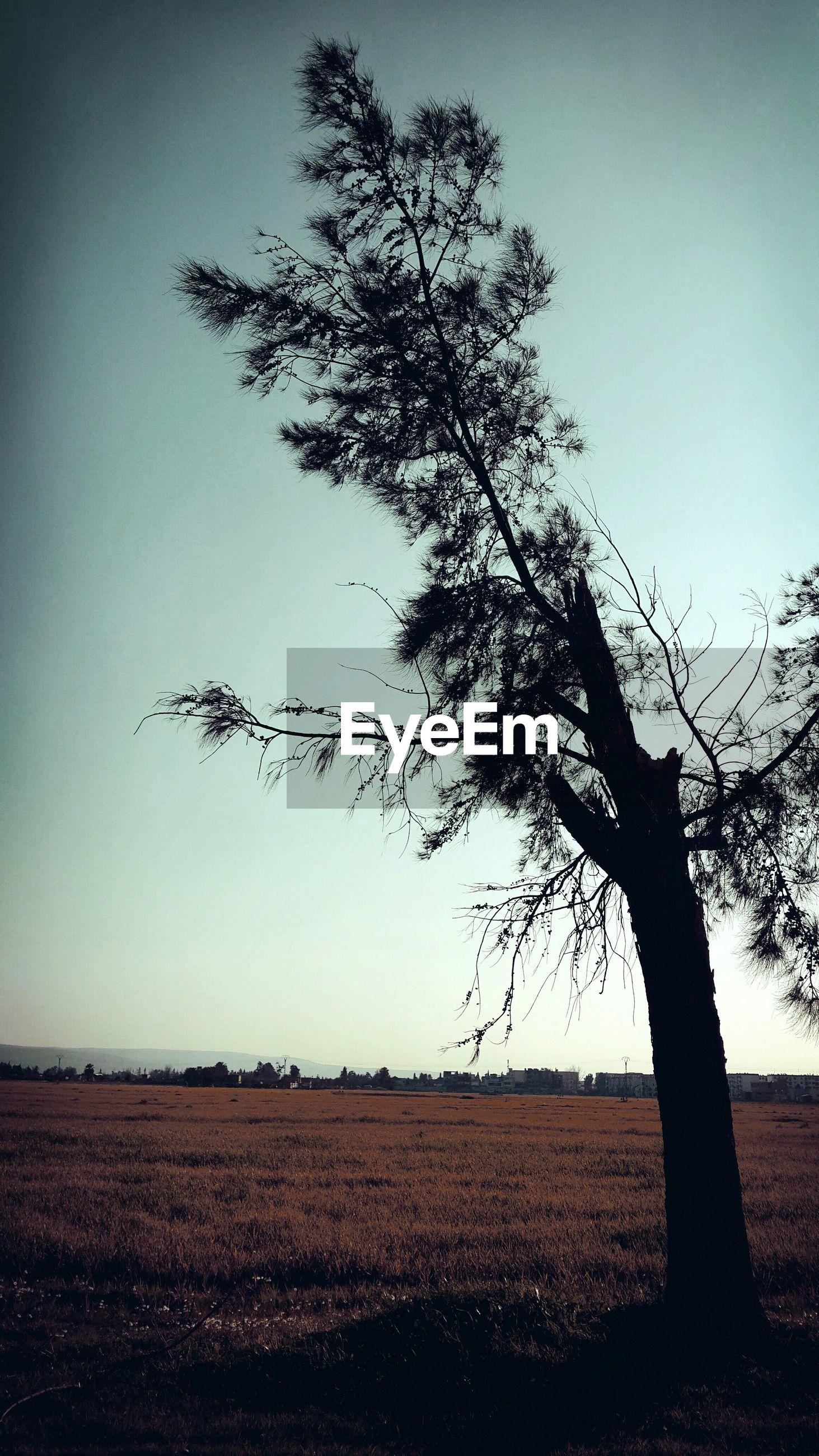 landscape, field, tranquility, tranquil scene, tree, bare tree, clear sky, scenics, nature, beauty in nature, rural scene, horizon over land, branch, sky, growth, non-urban scene, solitude, silhouette, single tree, remote