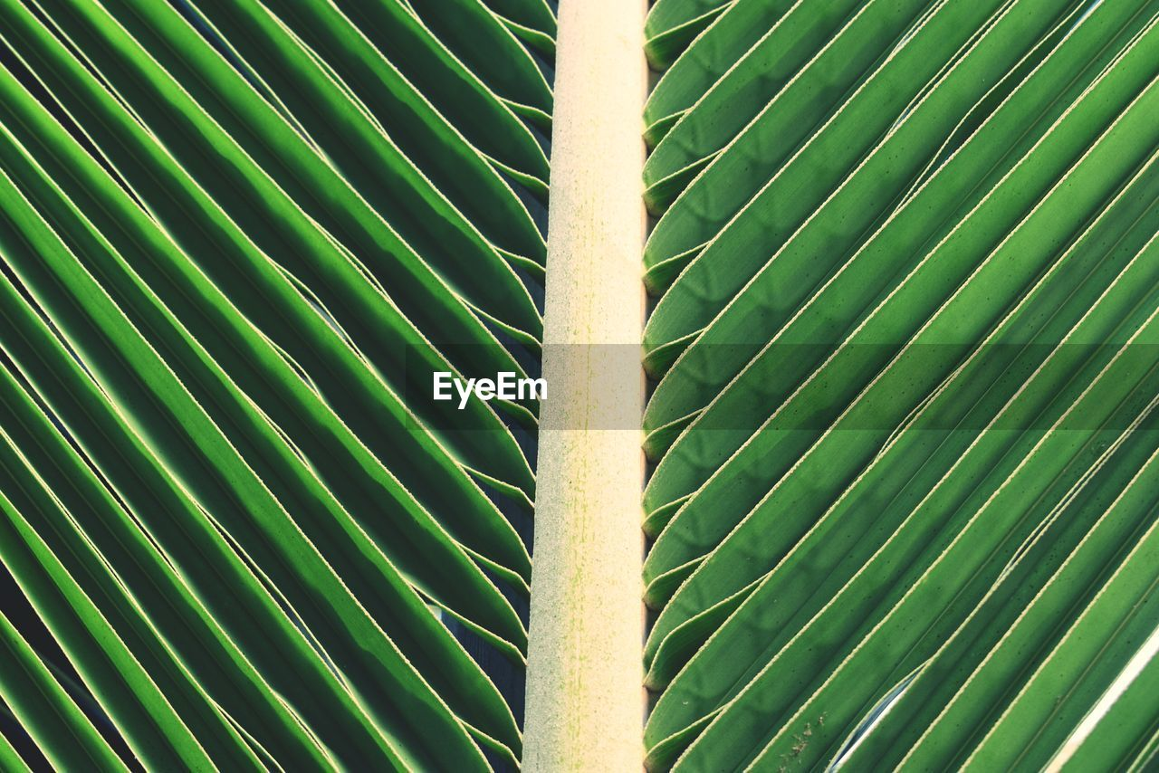 green color, full frame, backgrounds, no people, pattern, close-up, leaf, plant part, nature, plant, day, growth, beauty in nature, outdoors, natural pattern, textured, sunlight, detail, metal, thorn, bamboo - plant