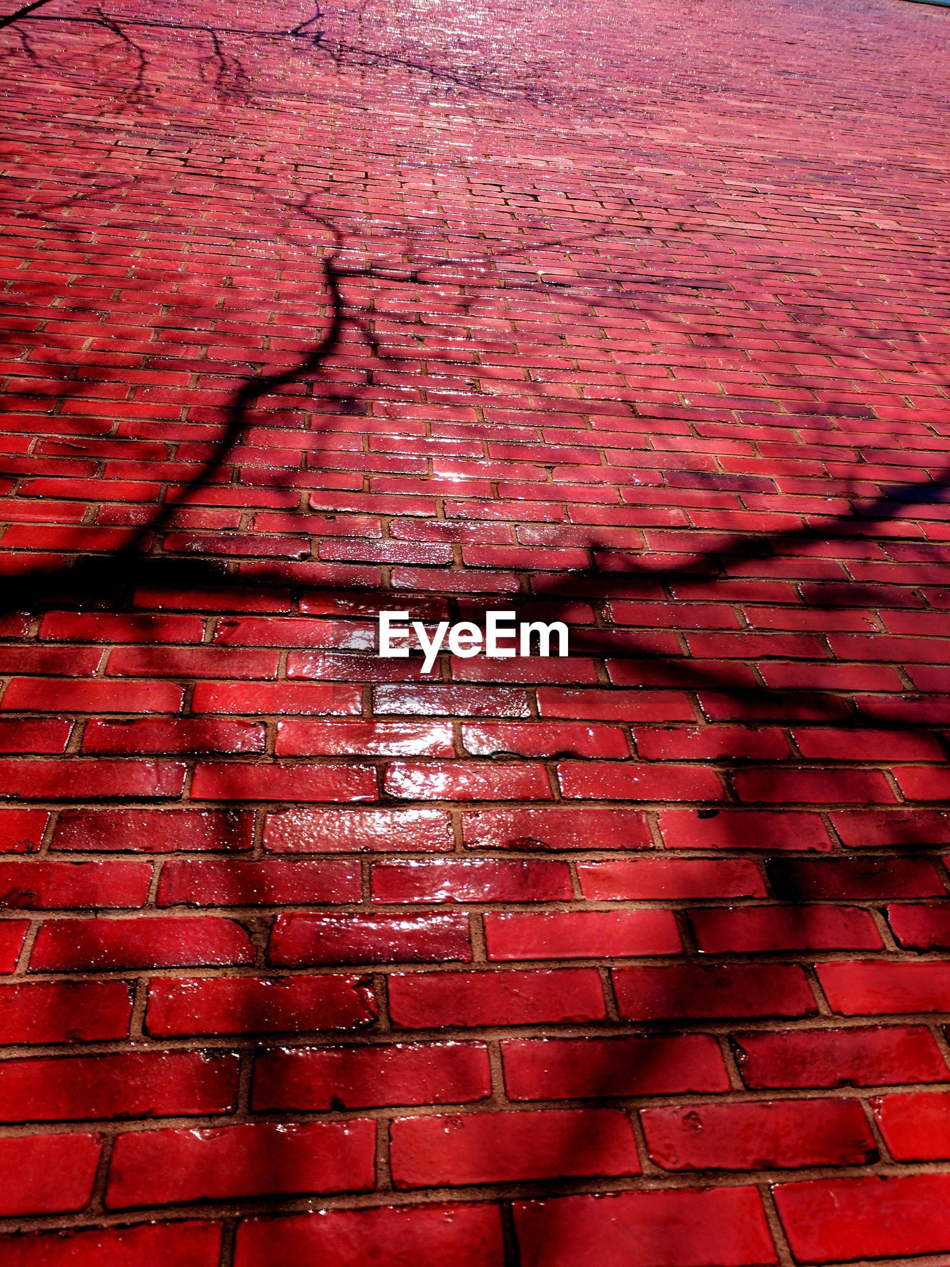Shadow of trees on brick wall