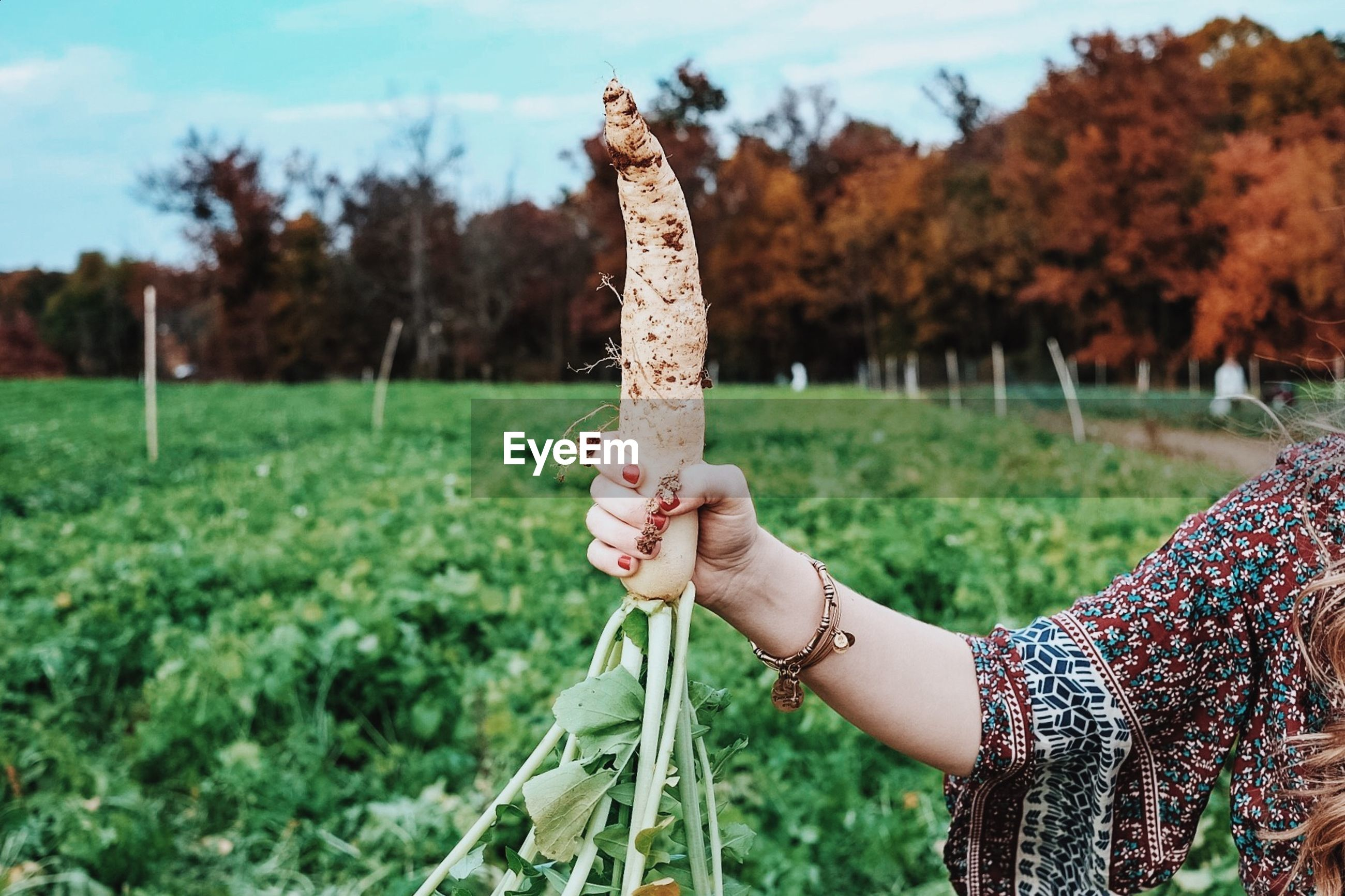 Cropped image of woman holding radish while standing at farm