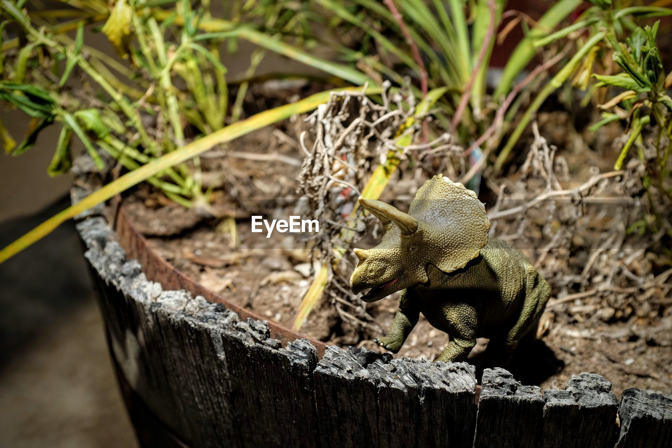 Close-up of triceratops toy on potted plant