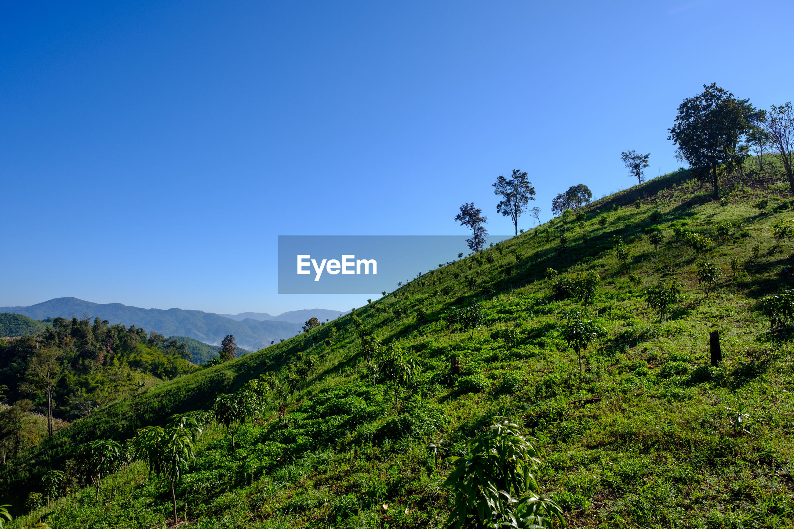 SCENIC VIEW OF GREEN LANDSCAPE AGAINST CLEAR BLUE SKY