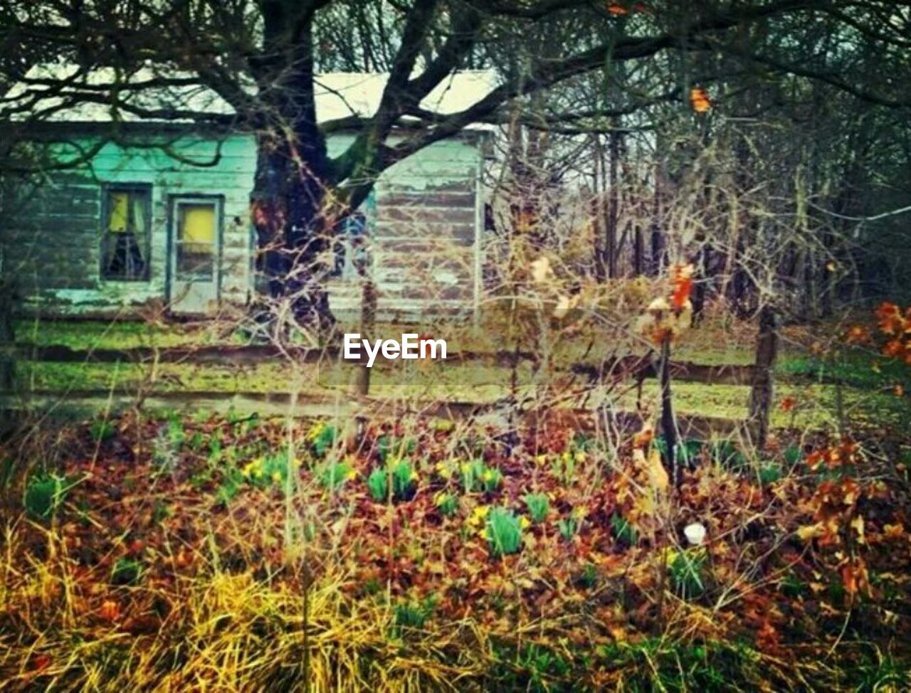 tree, branch, forest, autumn, bare tree, nature, tree trunk, outdoors, leaf, spooky, day, grass, no people, beauty in nature
