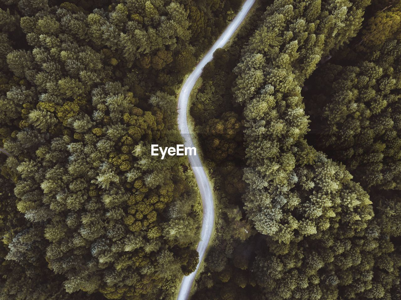 Drone view of curved road amidst trees