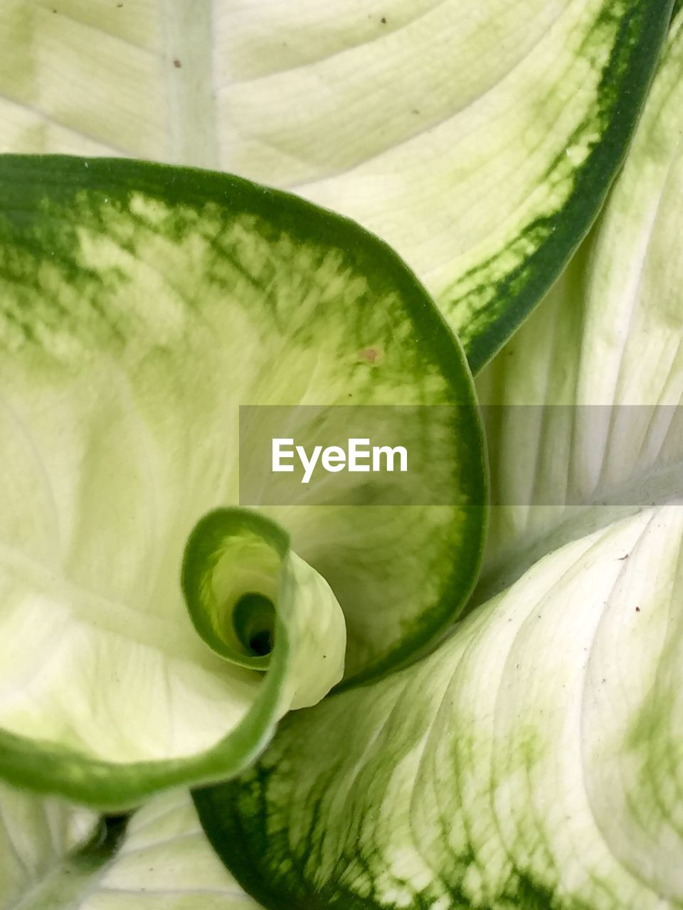 green color, vegetable, food and drink, freshness, healthy eating, no people, close-up, food, day, indoors, nature