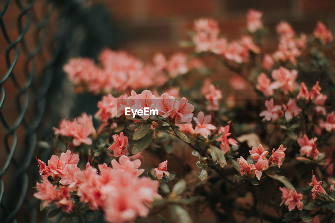 flower, growth, nature, petal, beauty in nature, plant, no people, blooming, fragility, outdoors, close-up, freshness, flower head, day