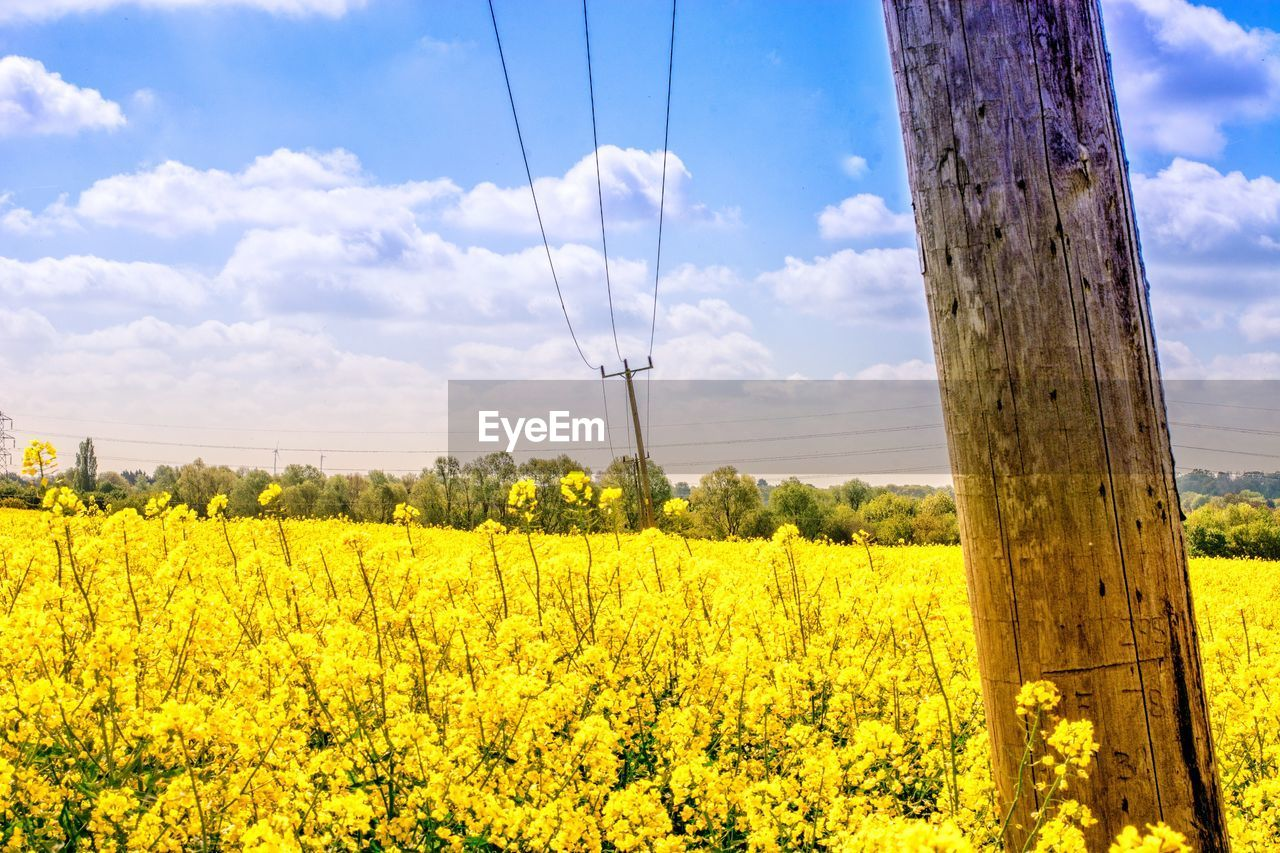 yellow, plant, land, field, sky, beauty in nature, growth, landscape, agriculture, flower, cloud - sky, nature, rural scene, scenics - nature, flowering plant, no people, tree, crop, day, oilseed rape, outdoors, wooden post