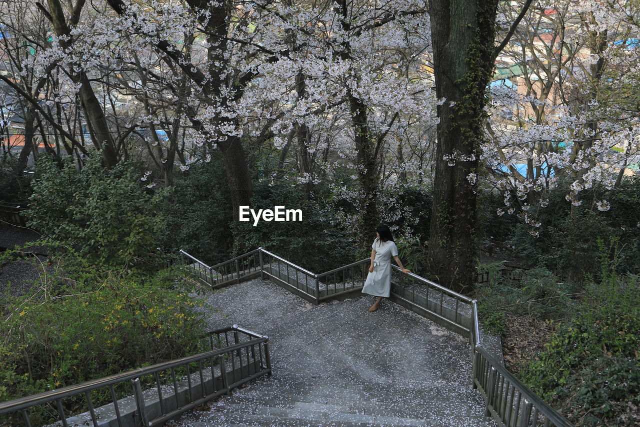High angle view of woman standing by railing against trees