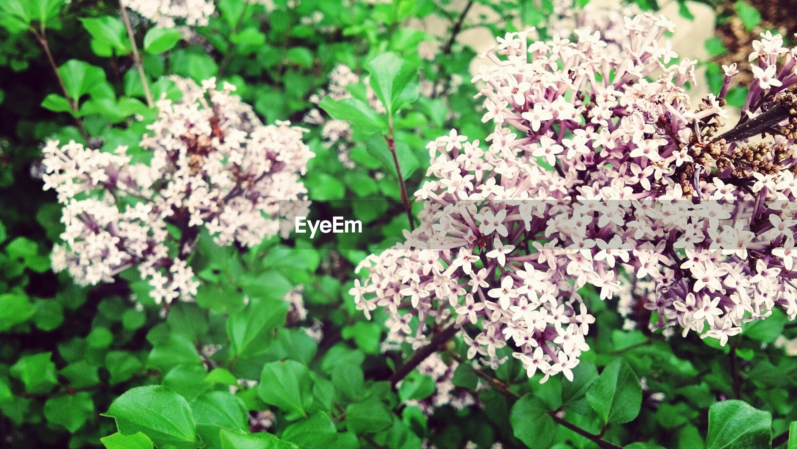 flower, freshness, growth, fragility, beauty in nature, petal, leaf, nature, blooming, plant, flower head, close-up, in bloom, blossom, pink color, green color, focus on foreground, park - man made space, outdoors, high angle view