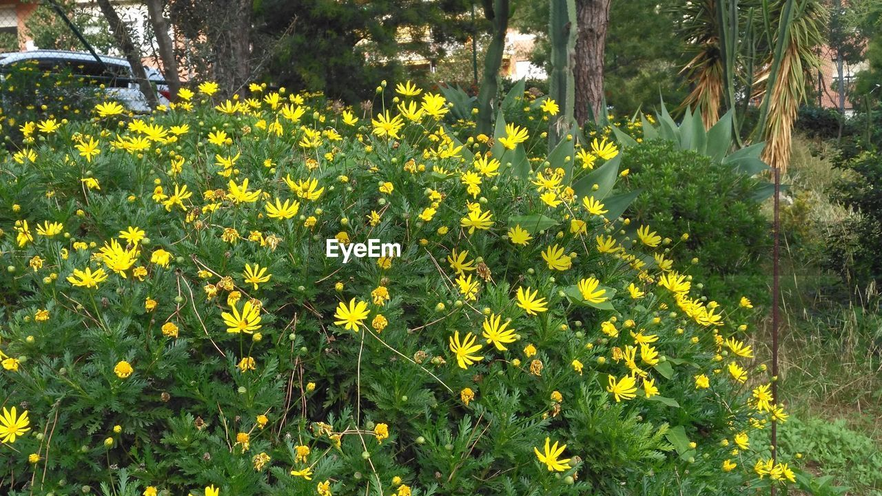 yellow, growth, nature, flower, plant, vegetation, field, blooming, outdoors, beauty in nature, no people, freshness, day