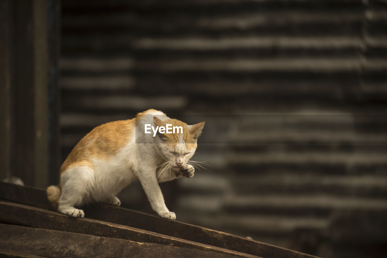 mammal, cat, animal themes, one animal, feline, animal, domestic animals, pets, domestic cat, domestic, vertebrate, no people, looking, focus on foreground, looking away, staircase, sitting, stray animal, wood - material, day, whisker