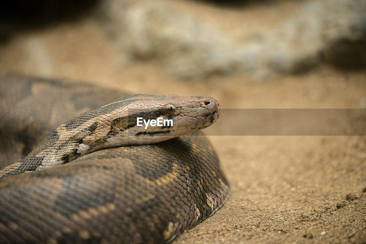 Snake in zoo