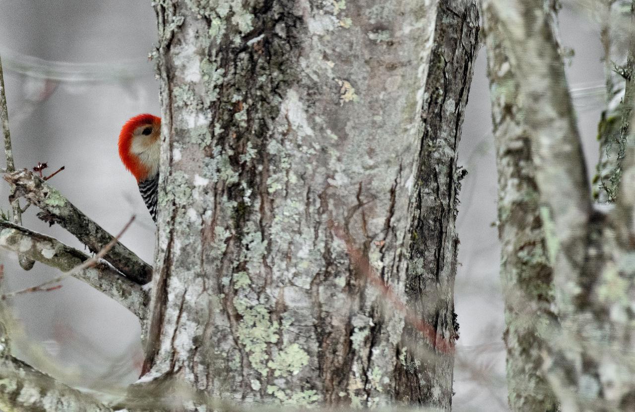 BIRDS PERCHING ON TREE TRUNK