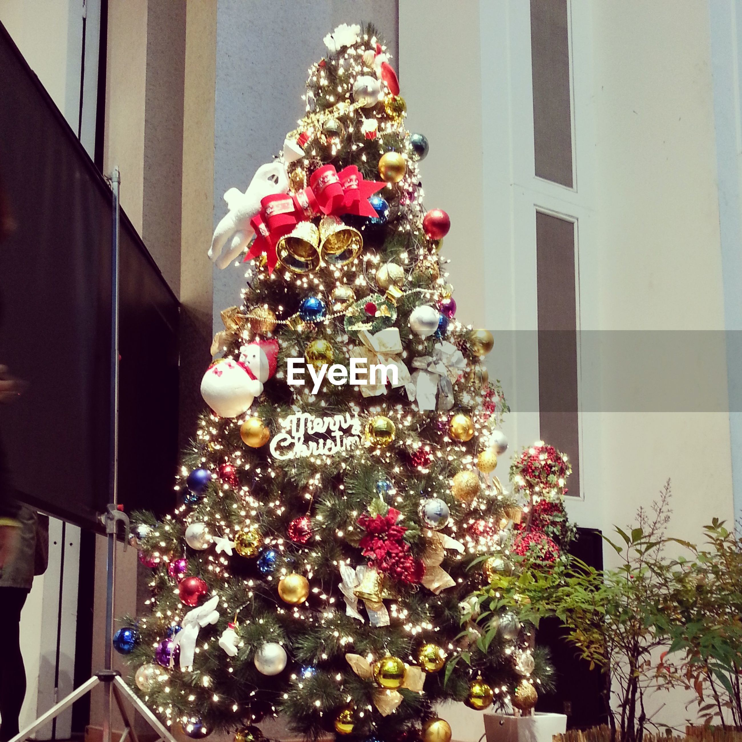 decoration, indoors, flower, architecture, built structure, celebration, low angle view, christmas tree, christmas, hanging, building exterior, tradition, potted plant, freshness, christmas decoration, window, no people, house, decor, home interior