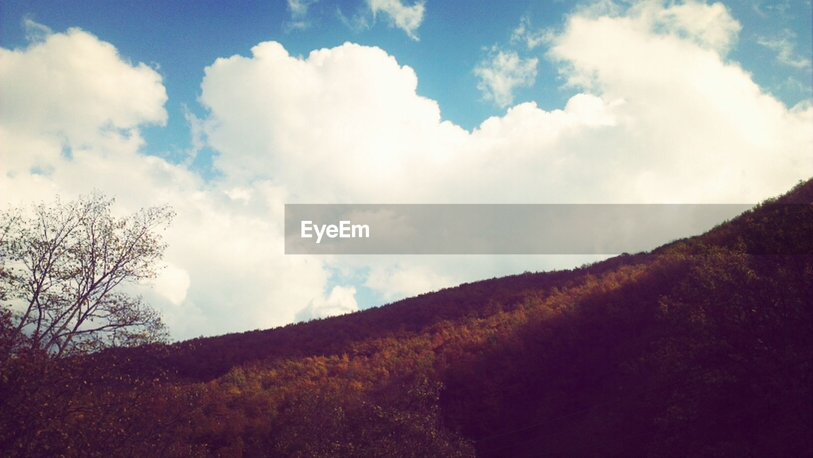 sky, tranquility, tranquil scene, tree, scenics, beauty in nature, cloud - sky, mountain, nature, cloud, landscape, cloudy, low angle view, mountain range, non-urban scene, idyllic, day, growth, outdoors, forest