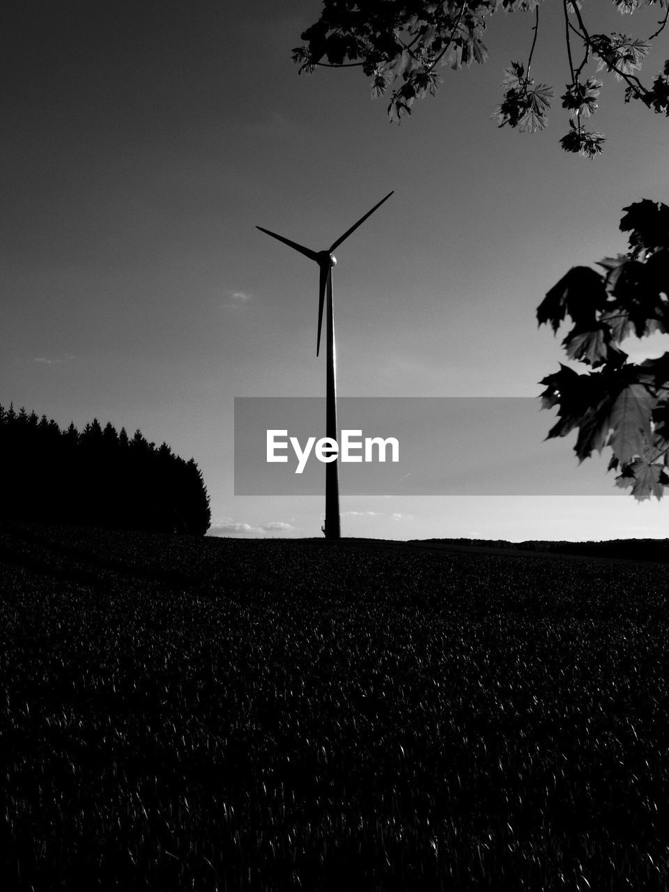 wind power, wind turbine, alternative energy, fuel and power generation, environmental conservation, renewable energy, windmill, field, rural scene, industrial windmill, agriculture, technology, nature, sky, traditional windmill, landscape, tranquility, scenics, beauty in nature, outdoors, no people, growth, day, tree, electricity, sunset, low angle view, power in nature