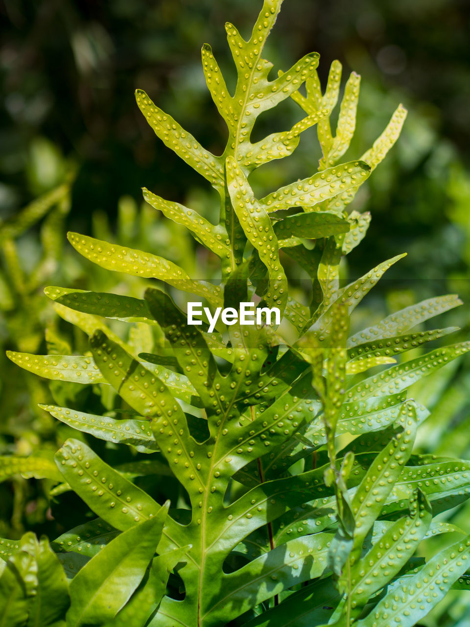 green color, growth, plant, nature, leaf, no people, freshness, close-up, beauty in nature, full frame, outdoors, day, healthy eating, water, backgrounds, food
