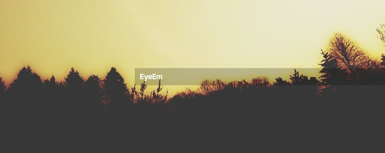nature, silhouette, tree, sunset, forest, no people, growth, landscape, beauty in nature, clear sky, plant, scenics, outdoors, sky, day