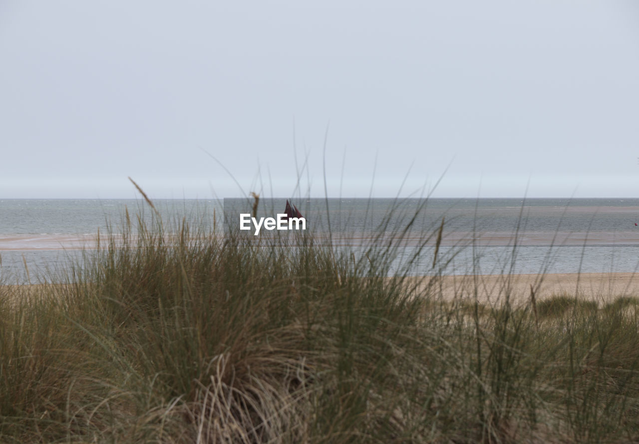 sea, water, sky, horizon over water, horizon, beach, grass, land, beauty in nature, tranquility, scenics - nature, plant, nature, day, tranquil scene, marram grass, no people, copy space, non-urban scene, timothy grass