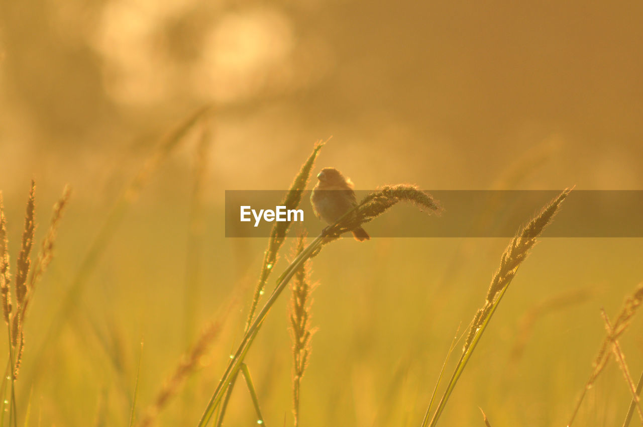 plant, growth, beauty in nature, agriculture, nature, close-up, focus on foreground, crop, field, no people, land, tranquility, day, cereal plant, farm, rural scene, outdoors, selective focus, sky, landscape, stalk