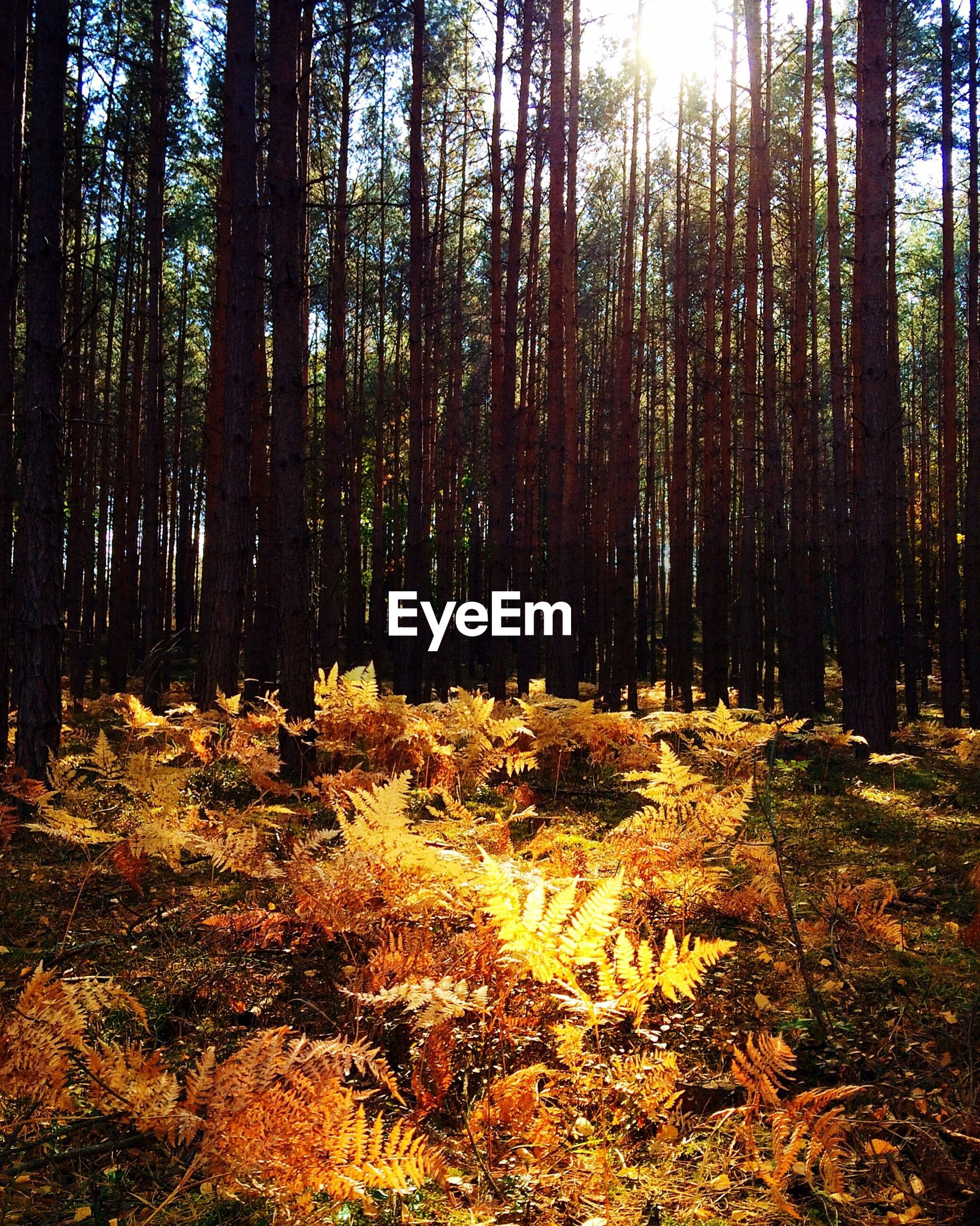 Trees and plants growing in forest during autumn