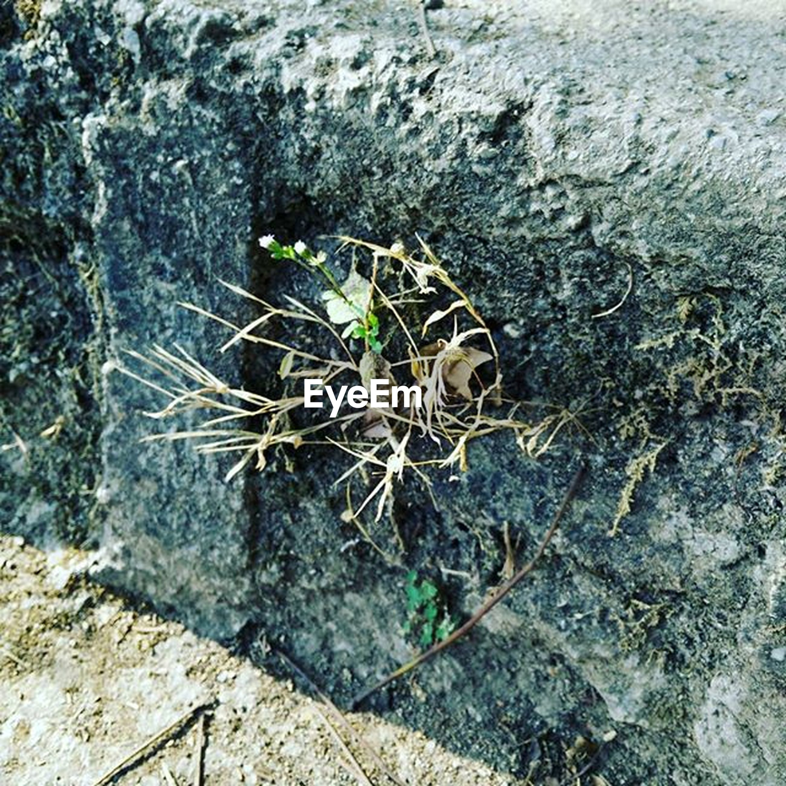 high angle view, damaged, abandoned, textured, wall - building feature, obsolete, close-up, plant, deterioration, outdoors, no people, old, day, weathered, broken, rough, run-down, messy, dirt, nature