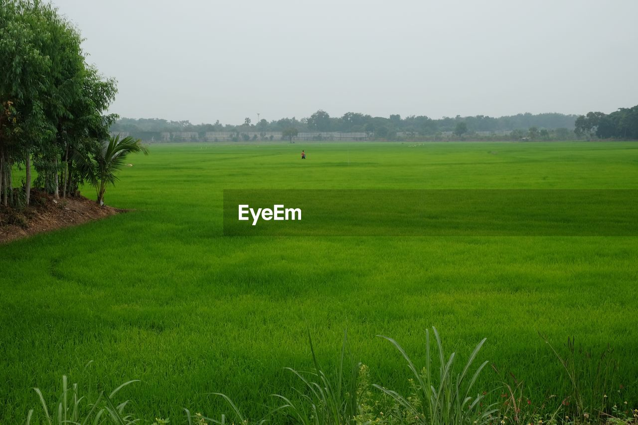 plant, grass, green color, field, tranquil scene, landscape, land, tranquility, tree, environment, beauty in nature, scenics - nature, nature, sky, growth, day, no people, non-urban scene, rural scene, fog, outdoors
