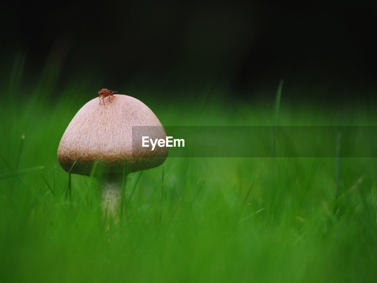 mushroom, fungus, plant, growth, green color, food, close-up, land, vegetable, field, grass, nature, toadstool, beauty in nature, selective focus, no people, freshness, day, edible mushroom, fragility, outdoors, wild