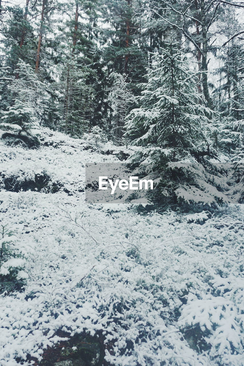 tree, snow, cold temperature, winter, plant, nature, no people, day, beauty in nature, land, tranquility, forest, outdoors, scenics - nature, covering, white color, tranquil scene, non-urban scene, full frame, coniferous tree, snowing, pine woodland