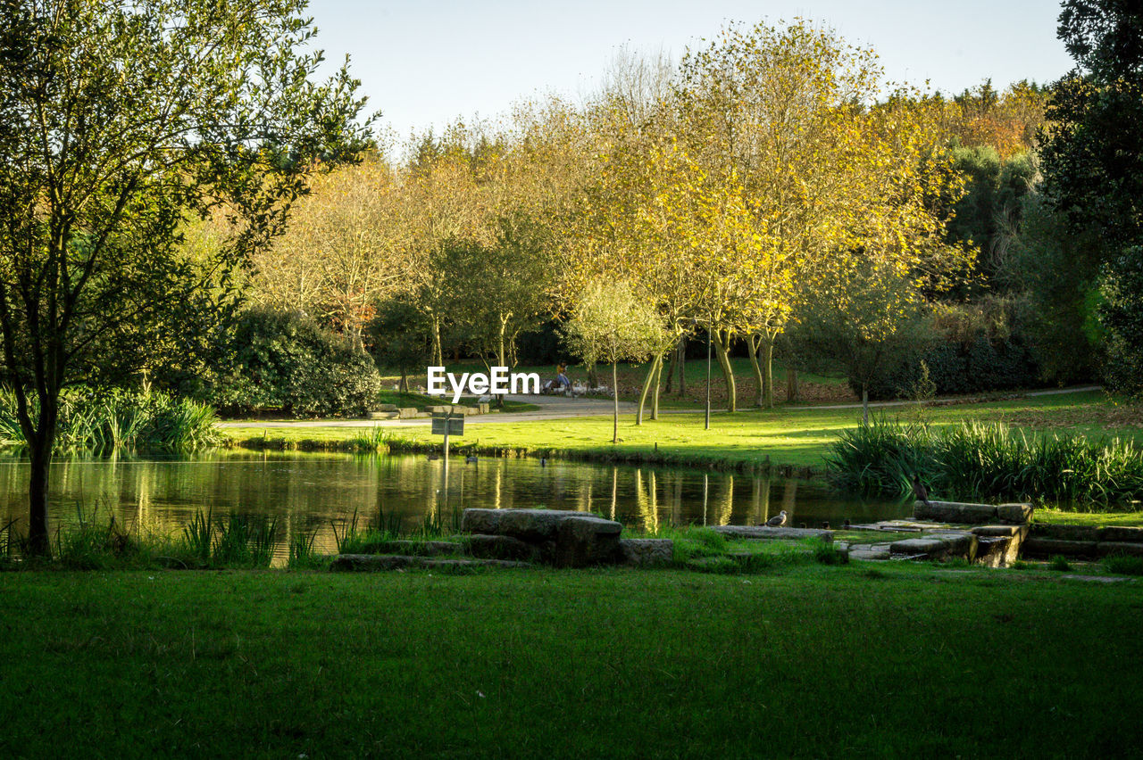 plant, tree, water, lake, green color, grass, nature, beauty in nature, tranquility, animal themes, tranquil scene, reflection, growth, no people, animal, day, scenics - nature, vertebrate, animals in the wild, outdoors