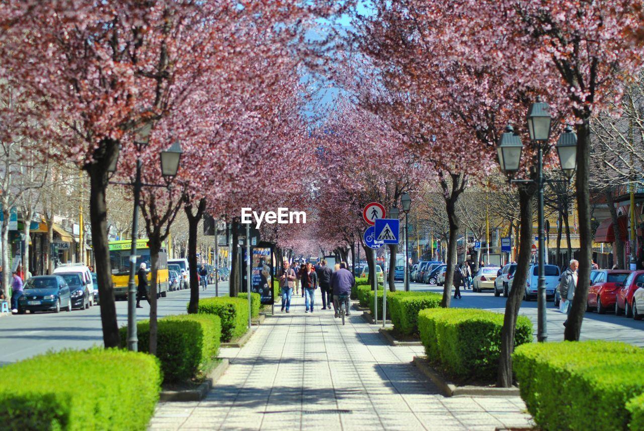 People Walking On Pathway Along Flower Trees