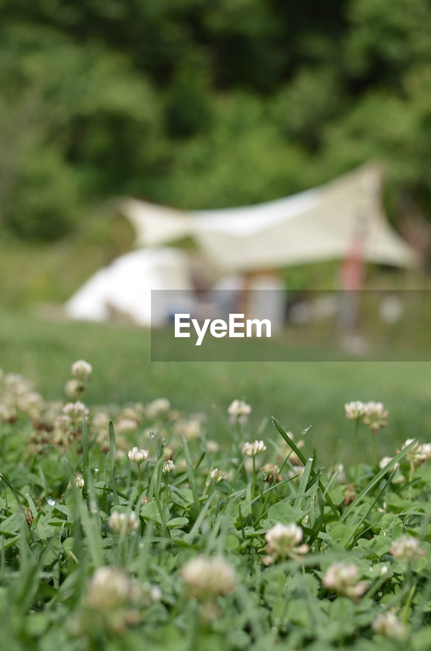 plant, growth, field, land, selective focus, green color, nature, grass, no people, flower, day, beauty in nature, flowering plant, freshness, environment, outdoors, close-up, landscape, fragility, tranquility, surface level