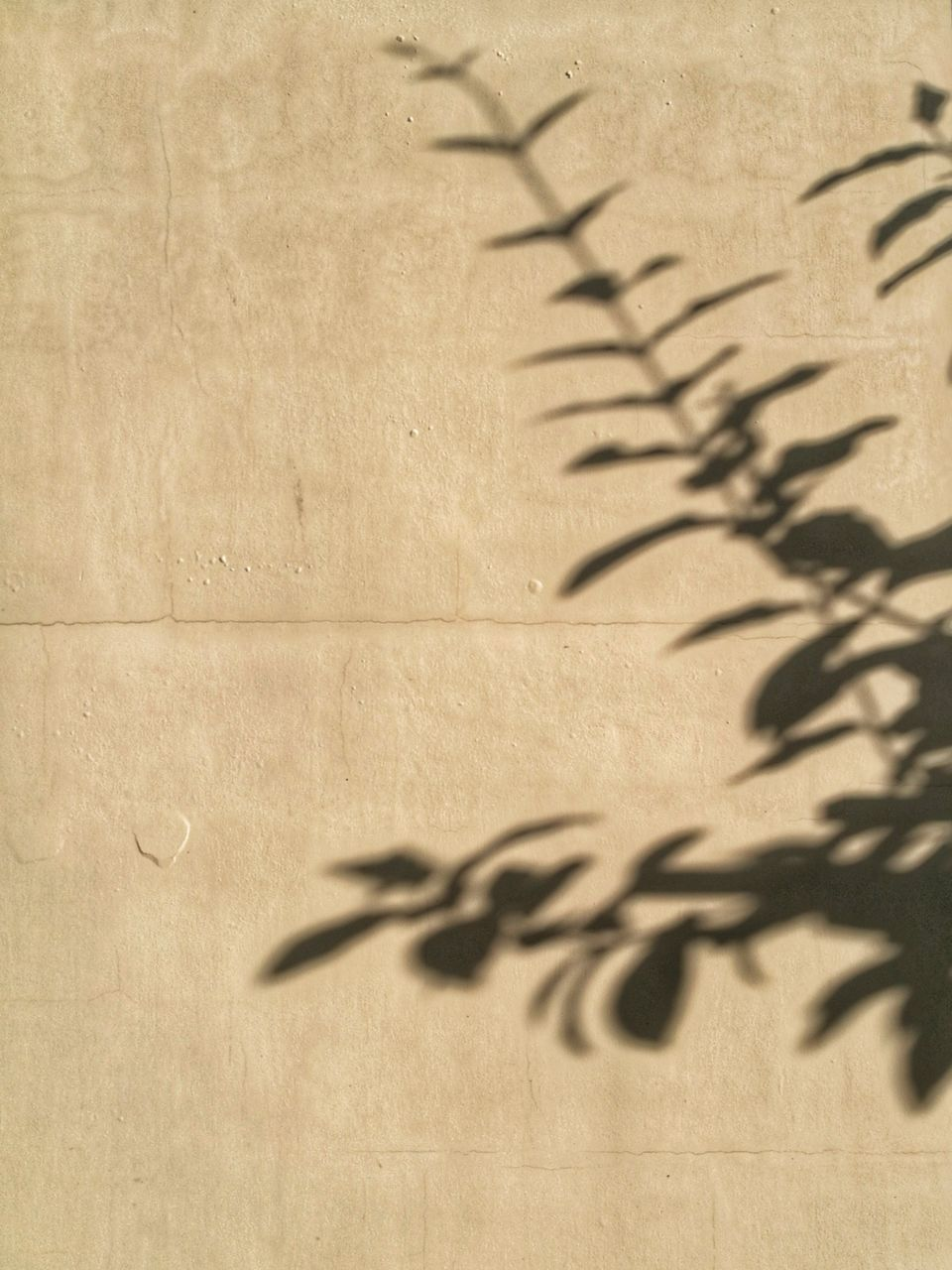 shadow, no people, indoors, paper, day, close-up