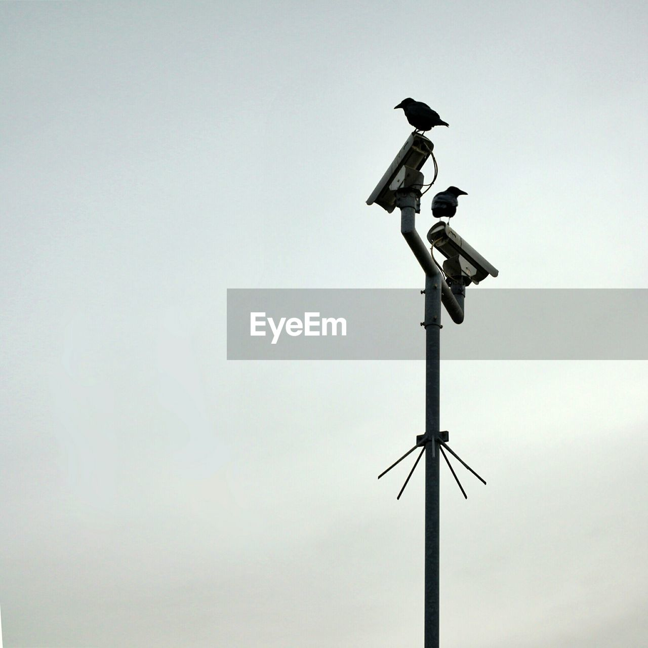 Low angle view of birds perching on security camera against clear sky