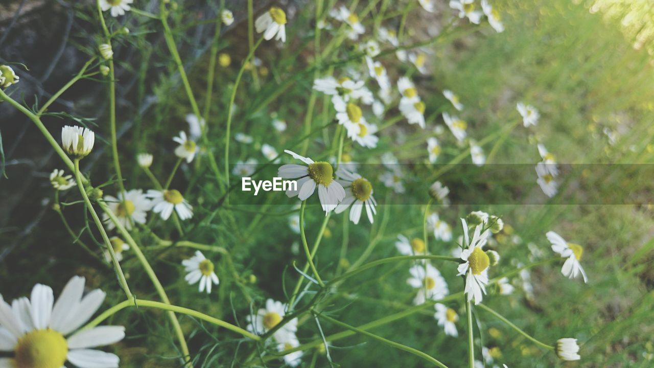 flower, growth, petal, nature, fragility, beauty in nature, white color, plant, blooming, freshness, day, flower head, outdoors, no people, leaf, close-up, snowdrop, animal themes
