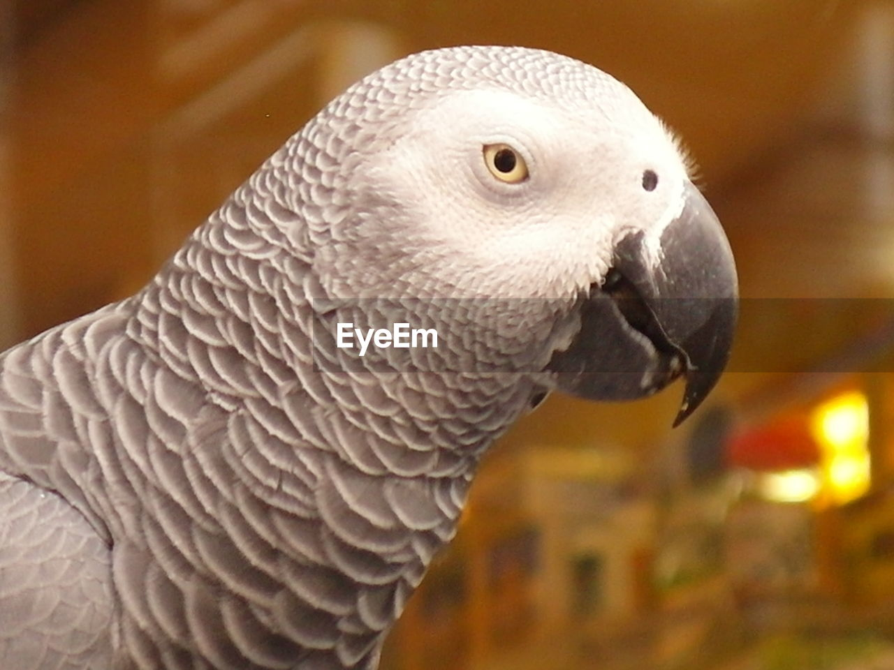 animal themes, animal, vertebrate, bird, one animal, animal wildlife, animals in the wild, close-up, parrot, focus on foreground, no people, beak, animal body part, day, looking, animal head, nature, side view, looking away, outdoors, animal eye
