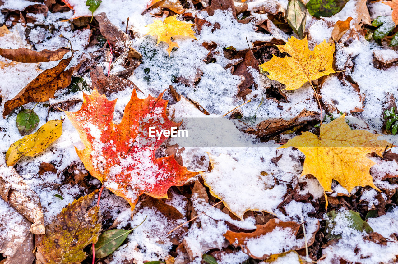 leaf, autumn, change, maple leaf, backgrounds, nature, maple, full frame, no people, outdoors, day, yellow, close-up, fragility, beauty in nature