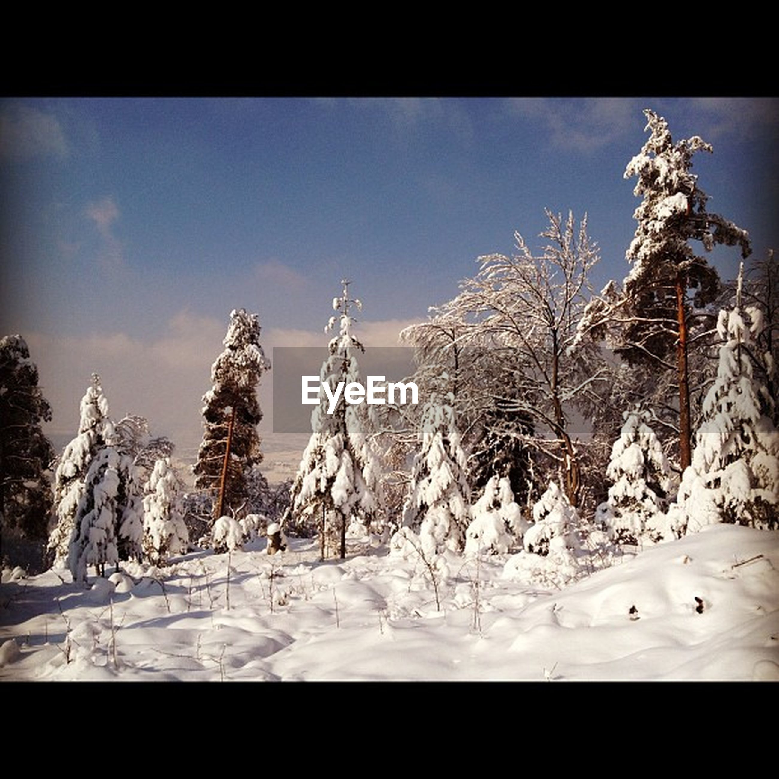 transfer print, snow, winter, cold temperature, auto post production filter, season, frozen, weather, covering, sky, low angle view, nature, tree, bare tree, covered, no people, day, white color, snowcapped mountain, outdoors