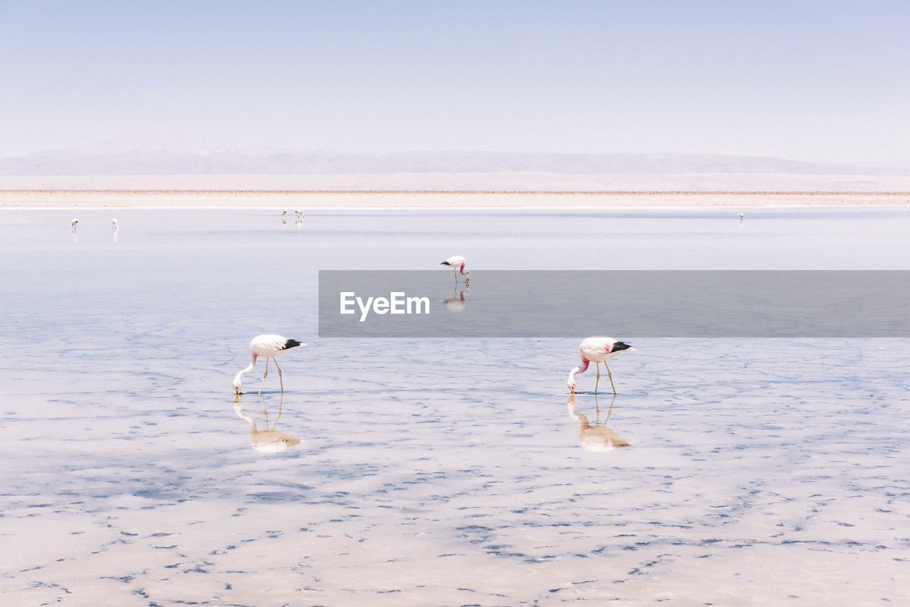 Flamingoes in lake during sunny day