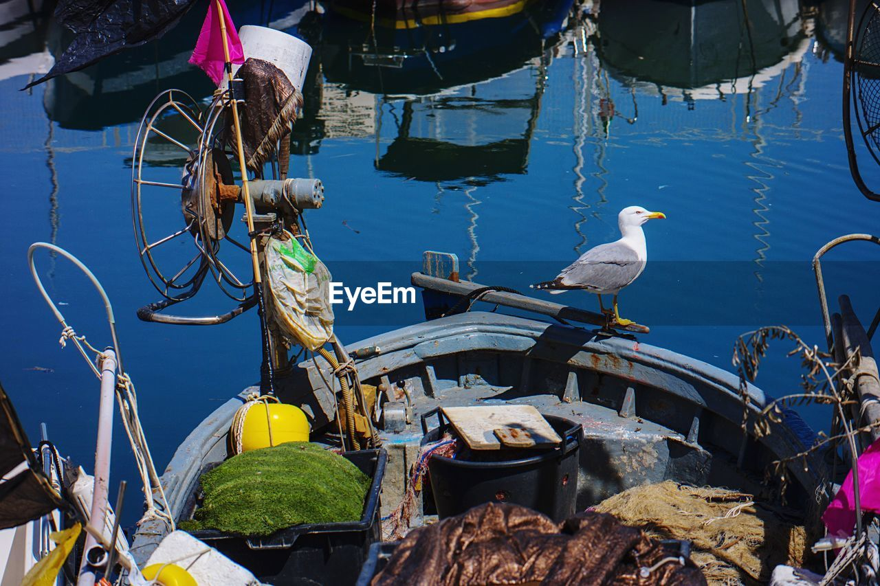 animal, vertebrate, animal themes, bird, animal wildlife, water, animals in the wild, nautical vessel, day, transportation, mode of transportation, group of animals, sea, perching, nature, outdoors, no people, seagull, fishing industry, fishing boat, wheel
